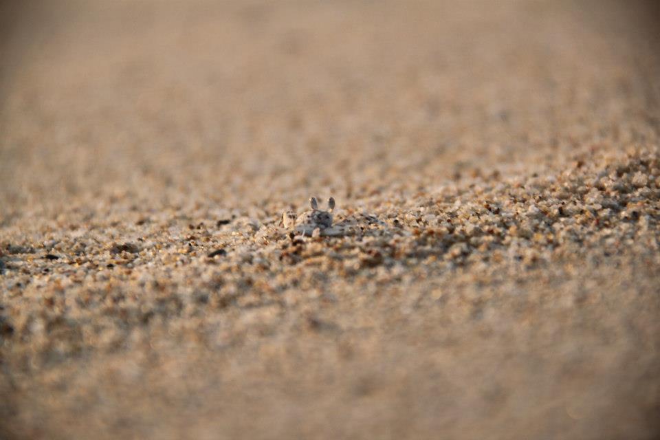 Sand crabs galore.