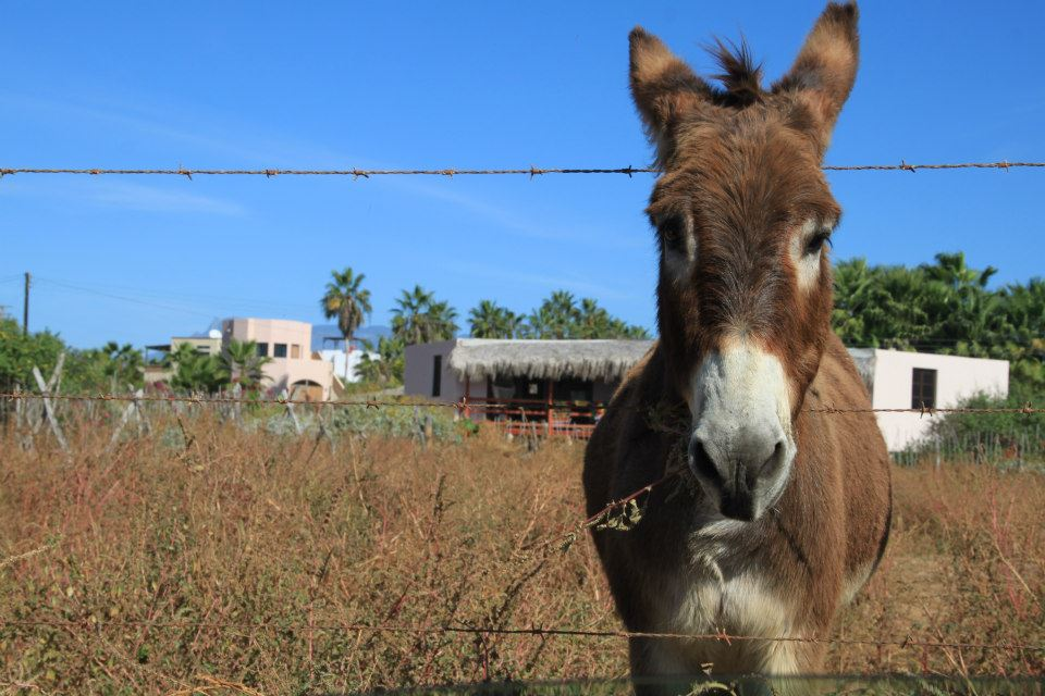 Local donkey was a rescue...if you didn't have food, he didn't like you.