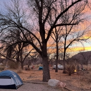 tent under a bare tree in Utah
